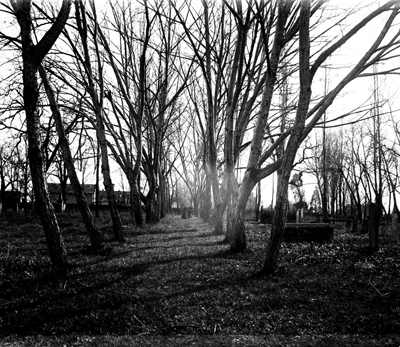 black and white image of rows of bare trees